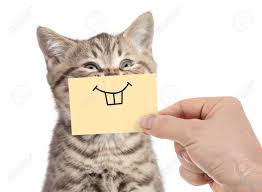 Image result for happy cat