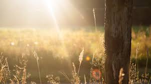 Image result for sun meadow